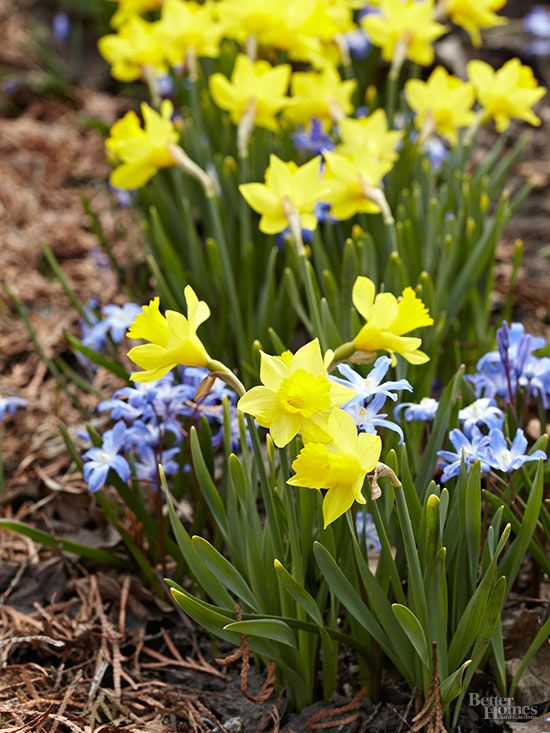 Get an early start on spring with a generous helping of bulbs that pop into bloom just as winter starts to fade.
