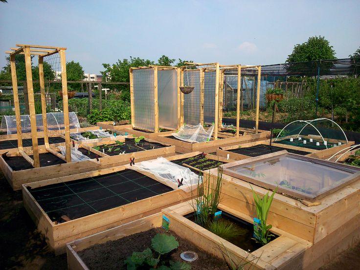 With raised veggie beds and trellisses finished, finally able to start sowing and growing plants. Met verhoogde groentenbakken en trellissen klaar, eindelijk tijd voor het zaaien en beplanten.