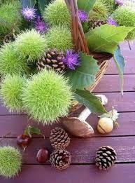 centrotavola con ricci di ippocastano, pigne e funghi
