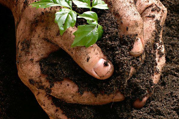 ما و طبیعت   غذای ارگانیک بخوریم