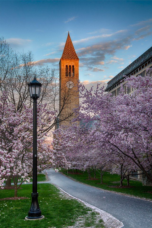 """college interest essays cornell Critical acclaim for books by gen and kelly tanabe authors of get into """"helps college applicants write better essays """"i recently applied to cornell."""