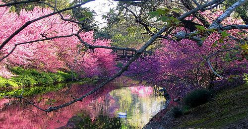 The University of California, Davis Arboretum (UC Davis Arboretum) is an approximately 100-acre arboretum along the banks of the old north channel of Putah Creek on the south side of the University of California, Davis.   The arboretum has 17 gardens and collections