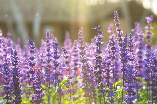 Садик пряных трав: самое ароматное украшение дачного участка