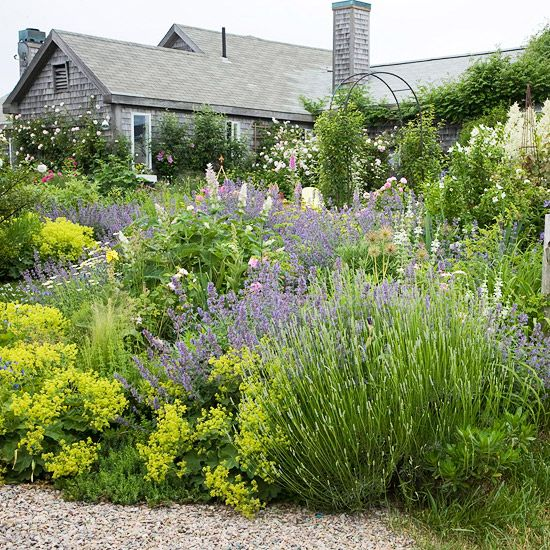 Cheery Repose - A collection of water-hardy plants, including lavender, catmint, goat's beard, and lady's mantle, all require minimal water to reach maximum growth.