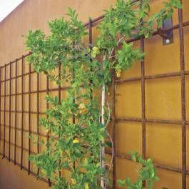 Go Vertical With Vines - Phoenix Home & Garden