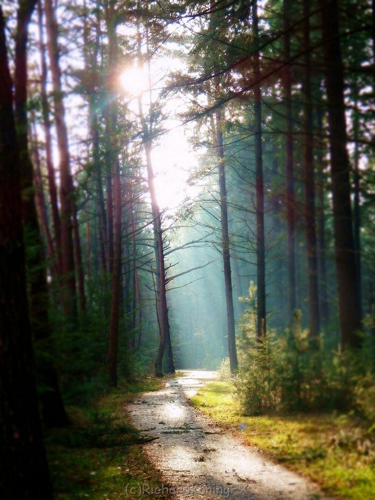Ook in december zonnige wandelpaden op de Sallandse Heuvelrug