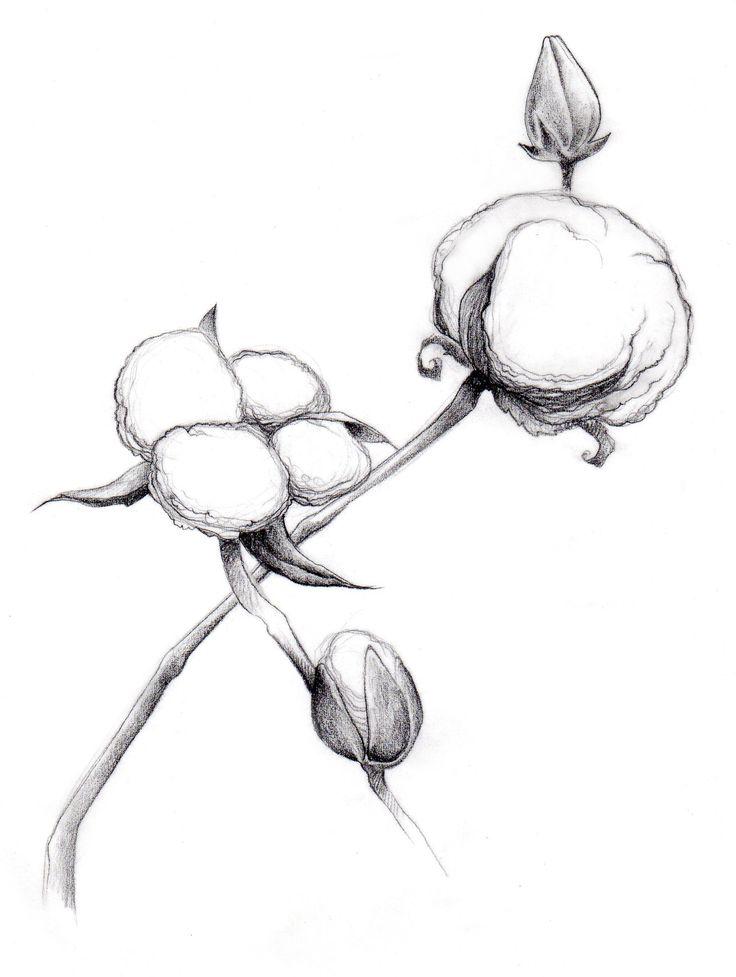 coloring book pages cotton plants - photo#31