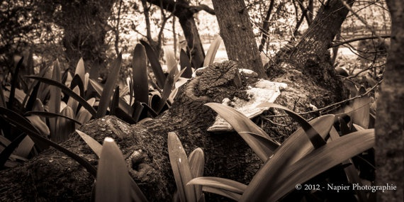 """""""Felled Tree"""" by Napier Photographie $ 115.00 - (original fine art giclee, limited series)"""