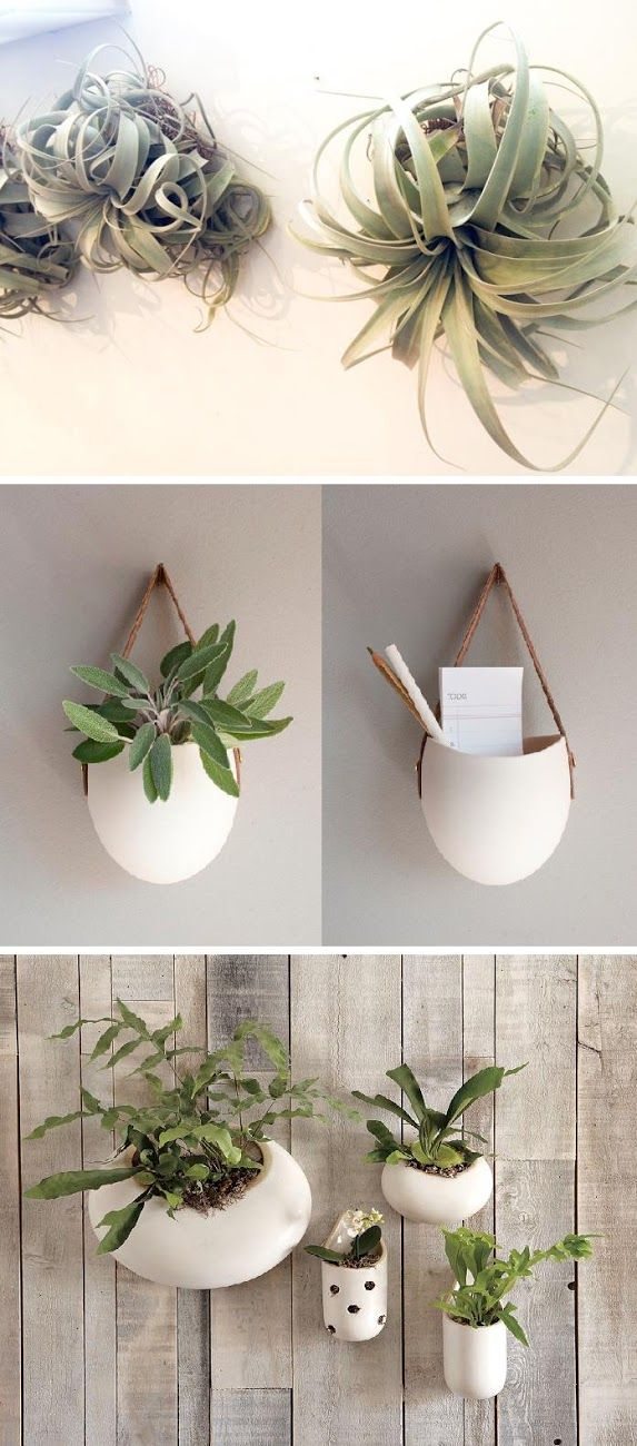 :: hanging plants :: indoor plants :: small plants :: airplants
