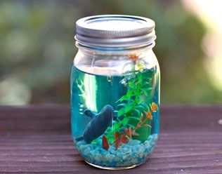mason jar aquarium favours. If kids parents wanted to take home, they could do so.