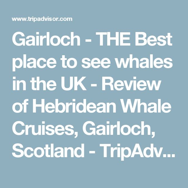 Gairloch - THE Best place to see whales in the UK - Review of Hebridean Whale Cruises, Gairloch, Scotland - TripAdvisor