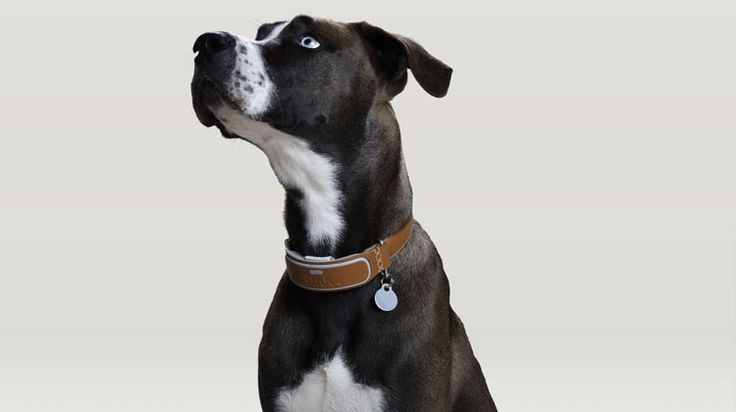 The best smart pet trackers, GPS collars and activity monitors are designed to help ensure your cat and dog are safe and sound, whatever they get up to.
