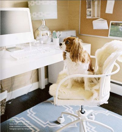 It's really all about the cavie!: King Charles, Office Spaces, Dogs, Workspace, Cavalier King, Home Offices