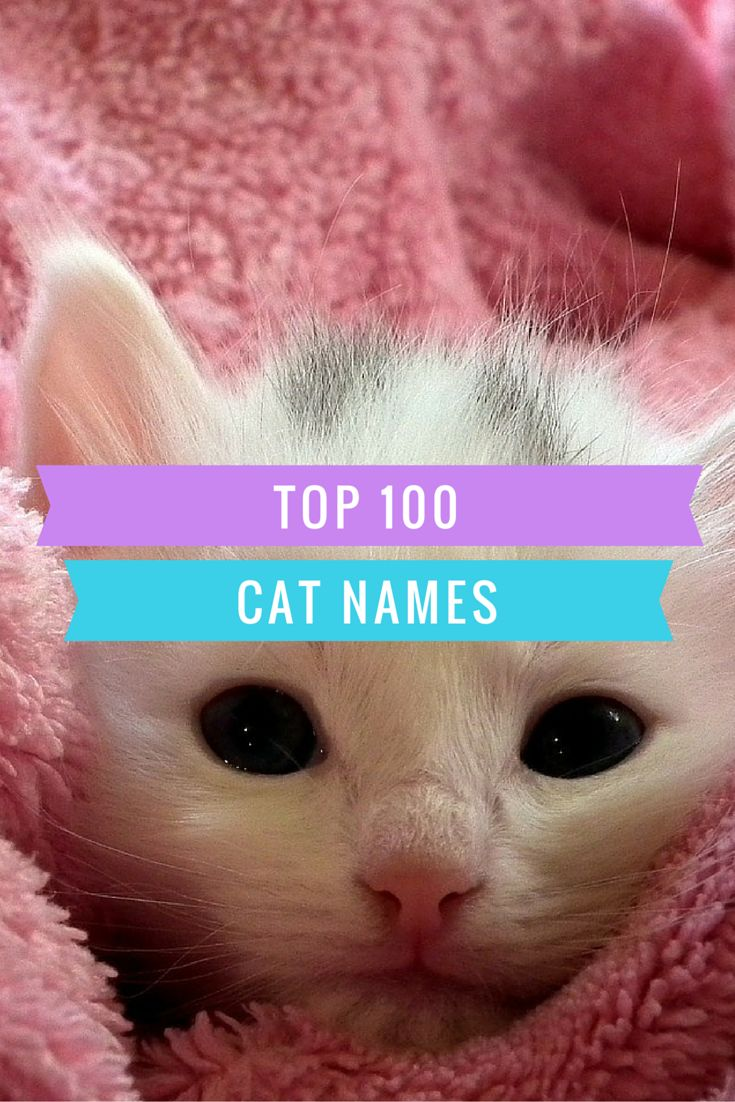 8 best The Best of CutePetName images on Pinterest