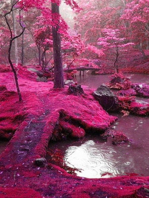 Dreamy nature , Pink Moss Bridges, Ireland