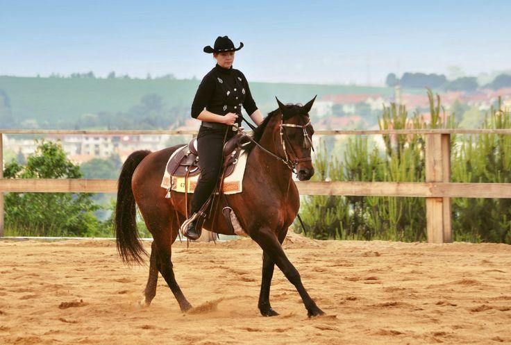 Ilči indiana boy - Quater horse,