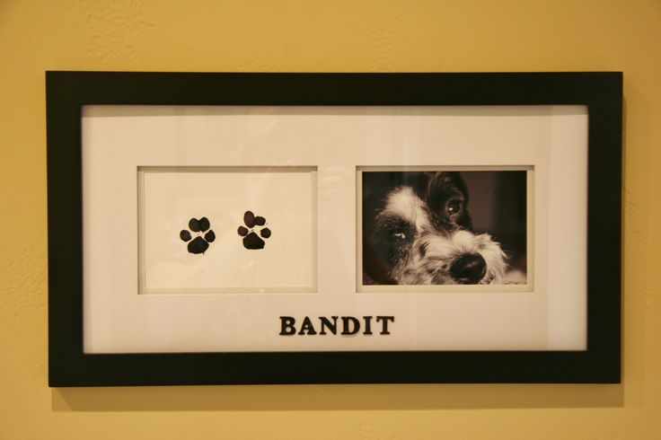 DIY your pet's paw prints.