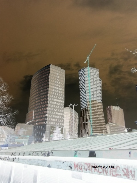 buildings soar into the sky