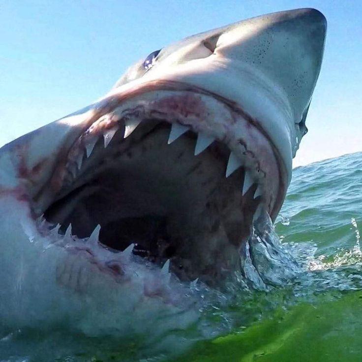 многие картинки акул бизнеса и власти видите, эти