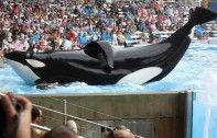 Celebrities Rip SeaWorld to Shreds Thanks to 'Blackfish' If you have not seen it yet the time is NOW