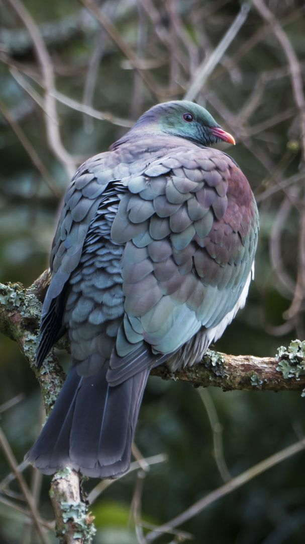 www.wharepuke.co.nz Wharepuke Kerikeri Northland NZ