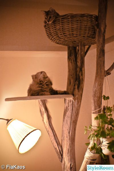 Cat tree-awesome-love that it looks a lot like a natural tree