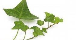 Para hacer el ritual de la Lluvia has de colocar hojas de hiedra en el fondo de un recipiente de cristal y dejarlo bajo la lluvia hasta que se llene.  No se puede embotellar ni guardar ha de usarse a la mañana siguiente de ser recogida.  Se introduce una vela verde en el agua y se rocia la superficie con unas gotas de aceiter de azahar Delante un quemador con unos trocitos de carbon en brasa. Se prende la vela verde y dice  Por el poder de Deva. Por la lluvia que trae la esencia de la diosa…