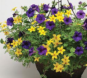 Easy Wave Blue petunia mixed with yellow bidens ... so fresh! www.wave-rave.com