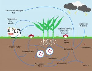 Addressing Nitrogen Deficiency in Organic Crop Production 01