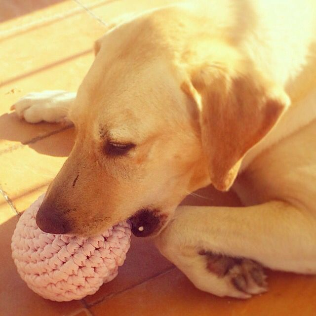 Pelota trapillo para perretes