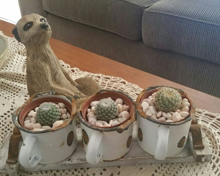 Cactus planted in tin mugs