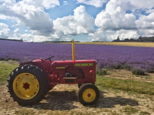 17 best join my community images on pinterest join tractor and lordington farm lavender open day w sussex fandeluxe Images