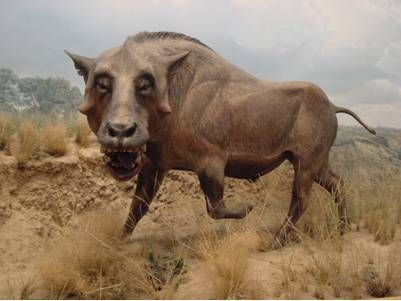 fossil entelodont | Entelodont Fossils with Facts and Photos.