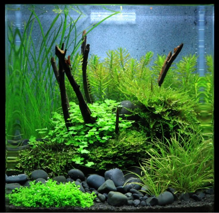 67 best images about aquarium zen on pinterest aquarium for Decoration zen aquarium