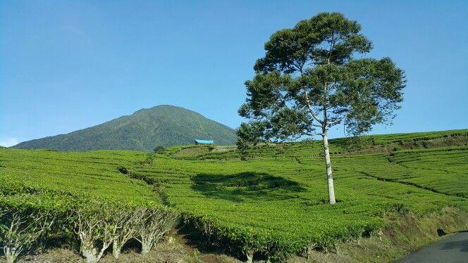Green oase #pagaralam
