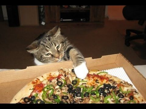 #Cats Stealing #Pizza Compilation"