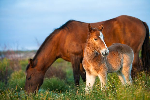 Fun fact? Did you know there's a whole herd of wild horses living in the wetlands outside Kleinmond? Sometimes you can spot them from the R44, but if you head to the Rooisand Nature Reserve, maybe hire canoe, your chances of seeing them are much better. Read more: http://www.news24.com/Travel/South-Africa/The-Whale-Coast-12-Gems-20130214