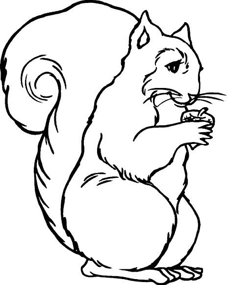 84 best Coloring Pages images on Pinterest Coloring books - best of coloring page of a red fox