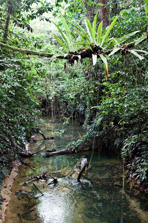 Borneo rainforest- remember a lots of leeches!