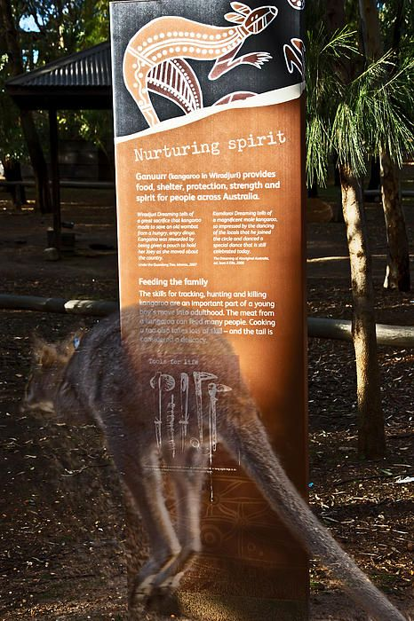 The Wiradjuri tribe are the largest Aboriginal group in New South Wales. They occupy a large area in central New South Wales, including Dubbo. They call it the land of the three rivers. Ganuurr (red kangaroo) was also one of their totems and spirit included in their dreamtime stories. One admirable think about Aborigine's was how they developed connection towards the land and the animals. We should learn that from them and all animals would be safe !