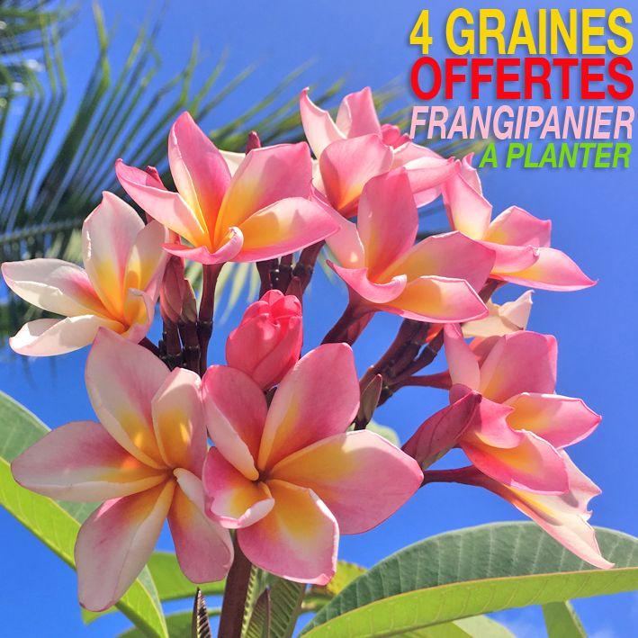 Faites Pousser Tahiti Chez Vous Des Graines A Planter De Frangipanier Sont Offertes Avec Votre Commande Cli Frangipanier Monoi De Tahiti Fleur De Monoi