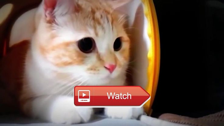 😸 Funny Cat Kucing lucu 😼 Saya membuat video ini dengan Editor Video YouTube 😽 on Pet Lovers 😻