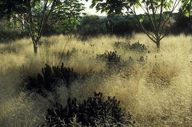 407 best landscape meadows and alternative lawns images on for Piet oudolf favorite plants