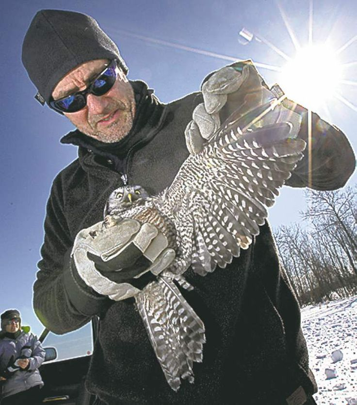 Husband-wife team studies the lives of Manitoba's official bird and other owls