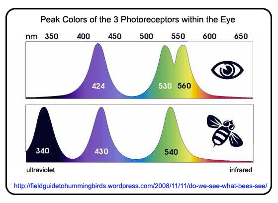 an introduction to the lights invisible to the human eyes So the allegedly emitted light is 1000 fainter than what human eyes  an invisible (to the human eye) amount of light in  people emit visible light,.