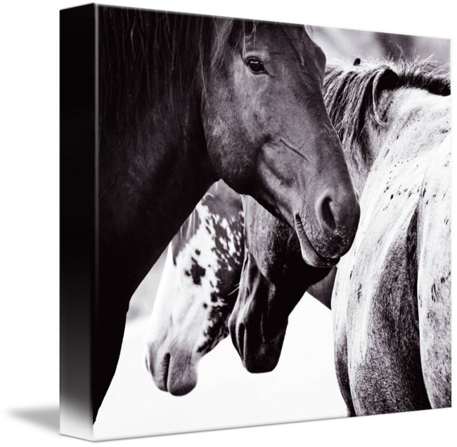 Rabid Horse Artwork Home Facebook - 650×637