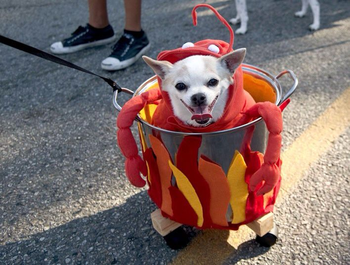 Cute dog in lobster outfit