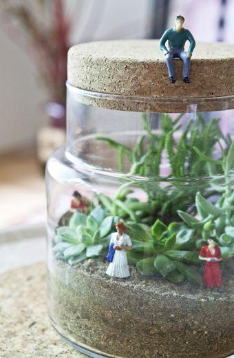 Les terrariums sont une rigolo et demande très peu d'entretien