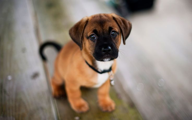 17 Best Images About Cute Dog On Pinterest