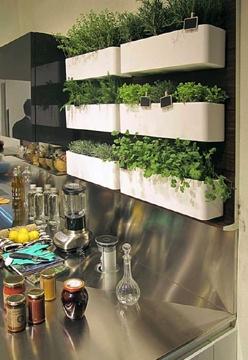 Simple Kitchen Herb Garden 55 best kitchen herb garden images on pinterest | gardening